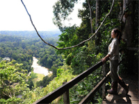 Danum Valley - Jungle Experience